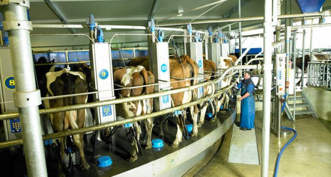 Fonterra and Abbott to Form Strategic Alliance For Dairy Farming in China