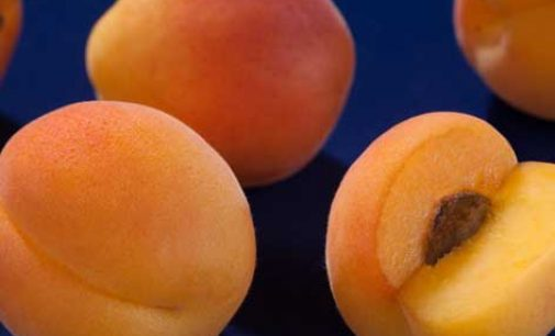 English Apricot Industry Starts Up