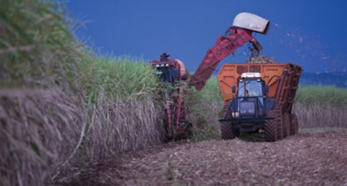 Alvean – A New Sugar Venture Emerges From Cargill and Copersucar