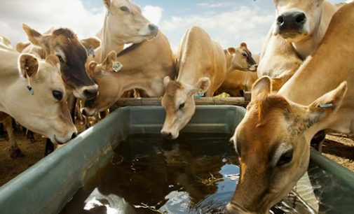 Nestlé Announces Farm Animal Welfare Commitment