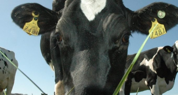 Green Credentials of Ireland's Dairy Sector Could be Key to Addressing Climate Change Challenge